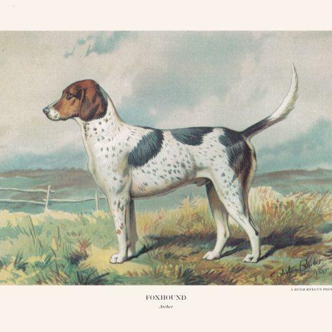 BG 05 Foxhound