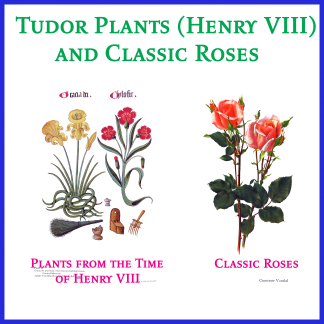Tudor Plants from the Time of Henry VIII and Classic Roses